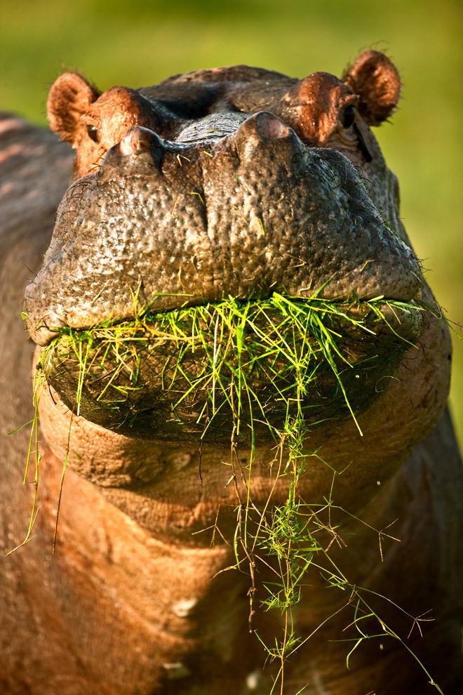 Foto di animali meravigliose Tumblr17