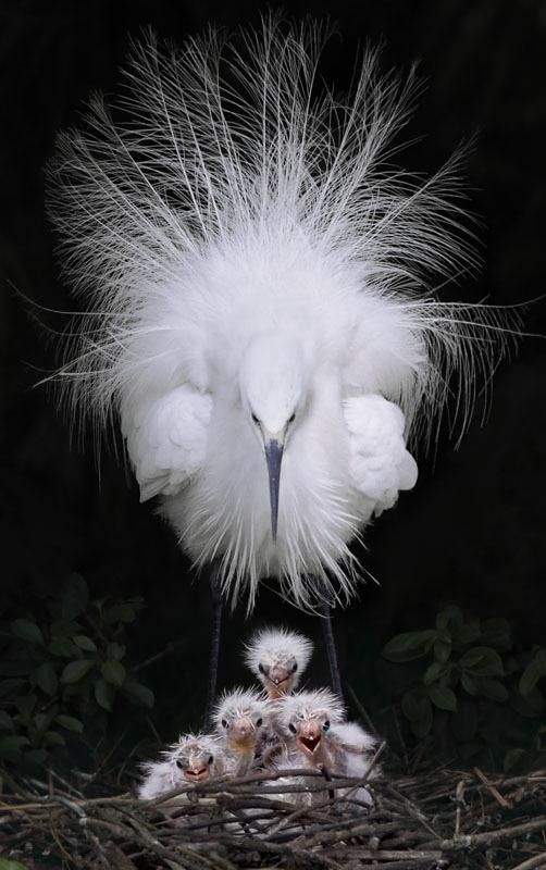 Foto di animali meravigliose Tumblr19