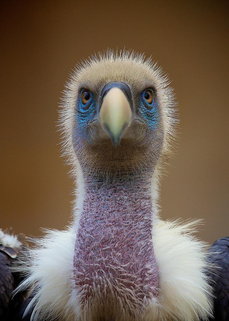 Foto di animali meravigliose Tumblr24