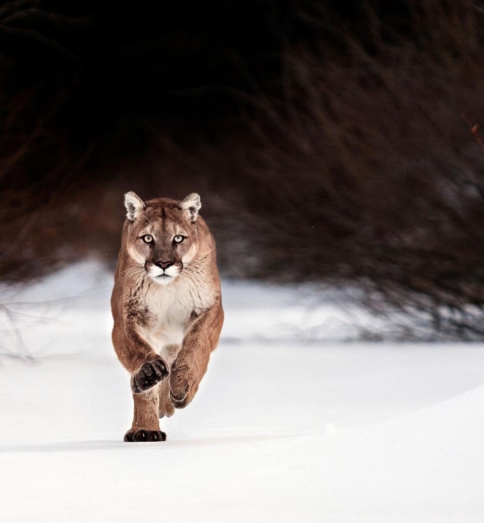 Foto di animali meravigliose - Pagina 3 Tumblr38