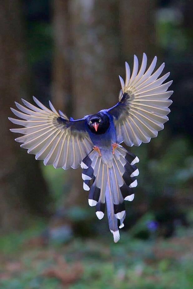 Foto di animali meravigliose - Pagina 3 Tumblr46