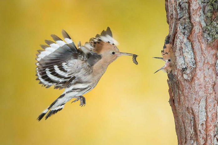 Foto di animali meravigliose - Pagina 3 Uccell11