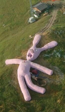 Coniglio rosa peluche Unname10