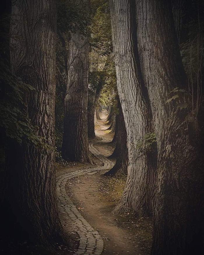 Quella strada nel bosco V_che10