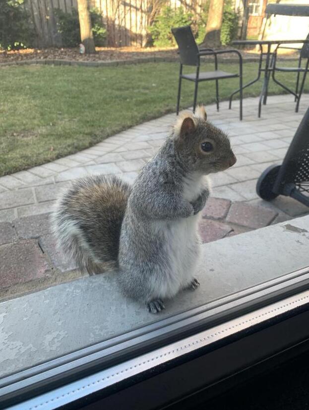 Gli scoiattoli non mangiano solo noccioline - Pagina 2 We-fed10