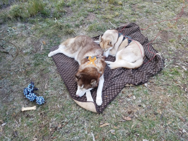 Hiking with Dogs~San Luis Peak, 14,014ft 20180911