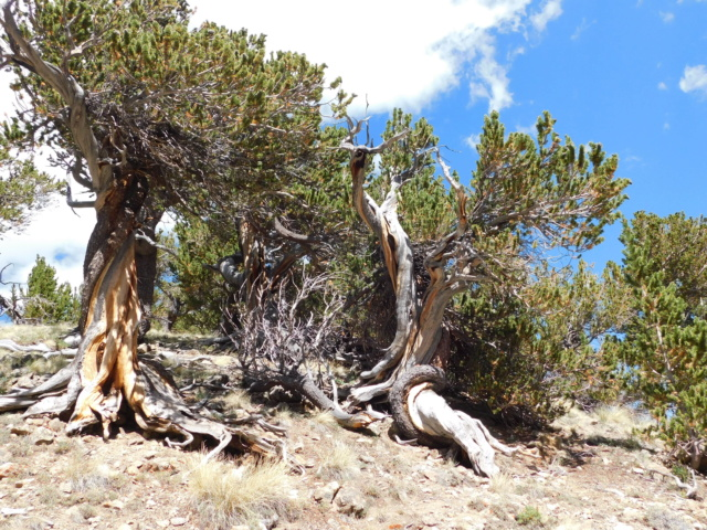 Hiking with Dogs~San Luis Peak, 14,014ft Dscn5110