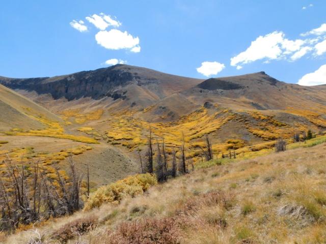 Hiking with Dogs~San Luis Peak, 14,014ft Dscn5111