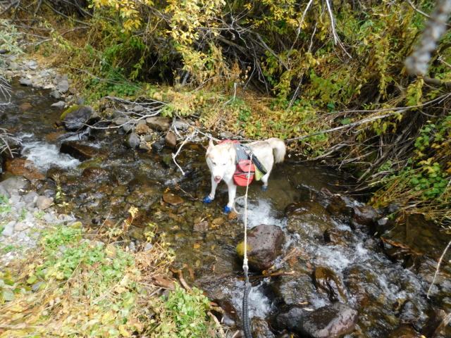 Hiking with Dogs~San Luis Peak, 14,014ft Dscn5112
