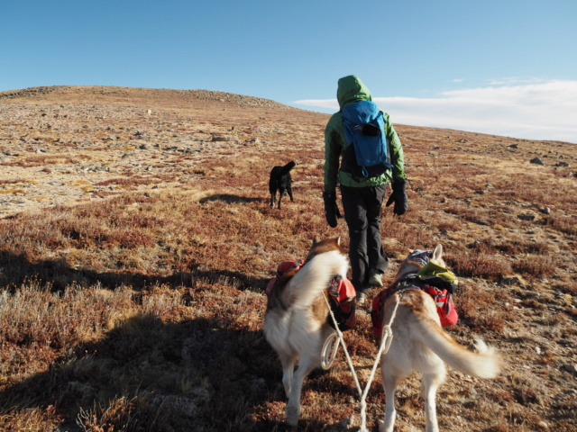 Hiking with dogs~Engelmann Peak Pa052914
