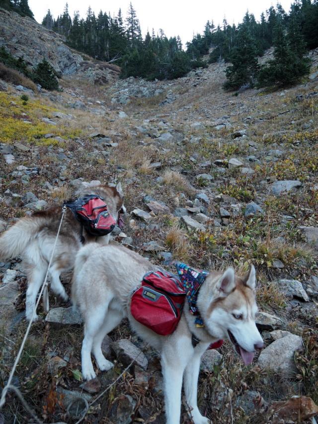 Hiking with dogs~Engelmann Peak Pa052915
