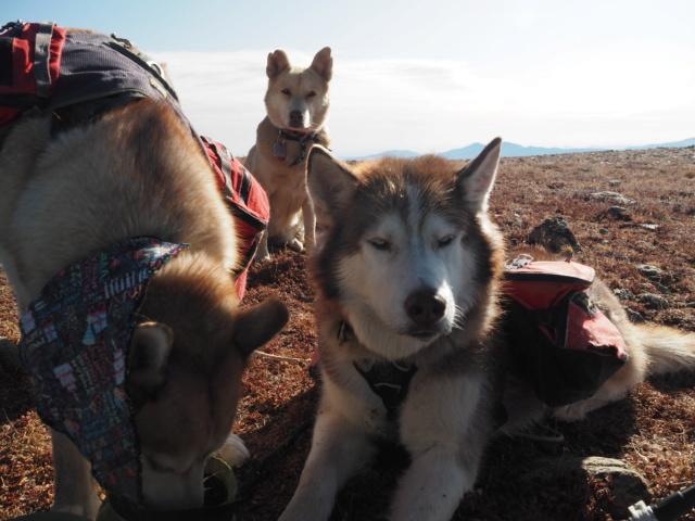 Hiking with dogs~Engelmann Peak Pa052917