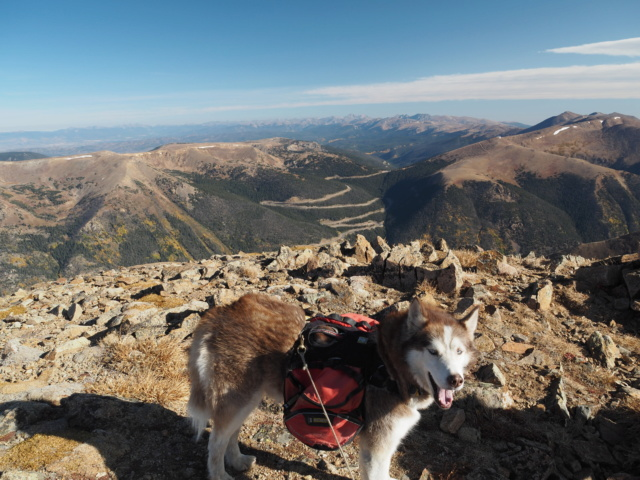 Hiking with dogs~Engelmann Peak Pa052918