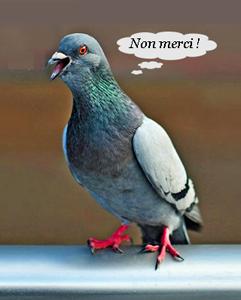 Tactique Coronavirus - Page 4 Pigeon13