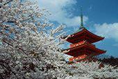 Karma REsimler Japony12