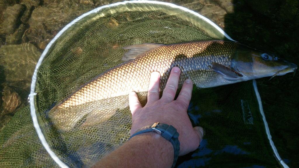 Pêche dans l'Ourthe - Belgique D1538410