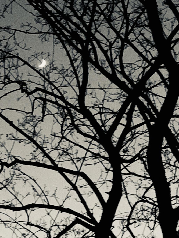 نحنا والقمر جيران  8b7f8c10