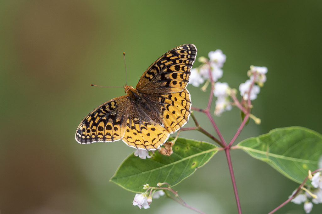 Papillons (4 images) Argcyb10