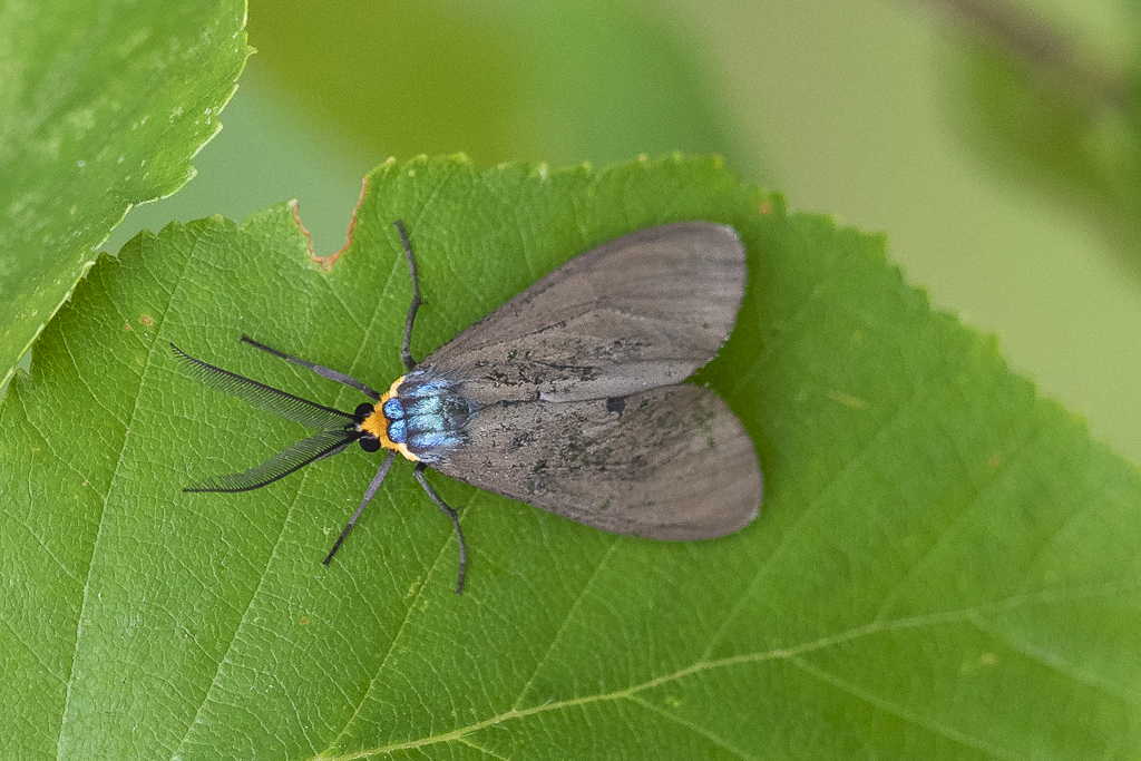 Papillons (4 images) Ctzonu10