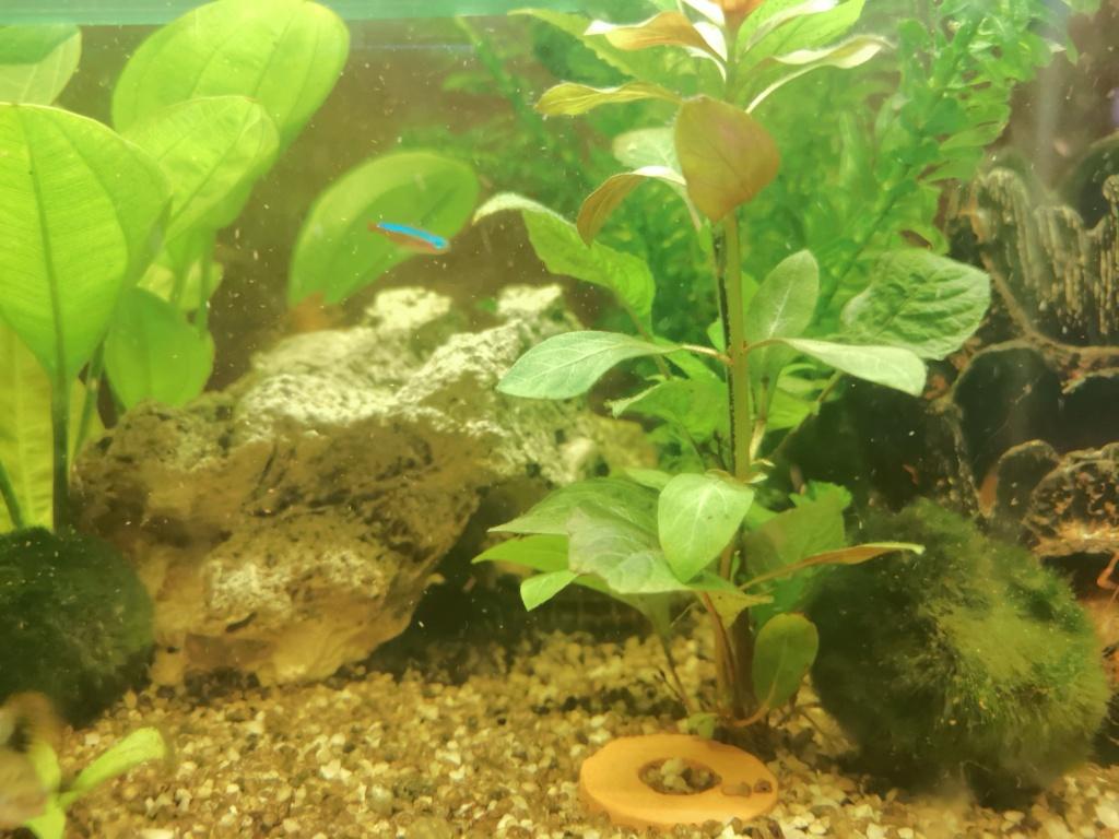 mon aquarium Img_2010