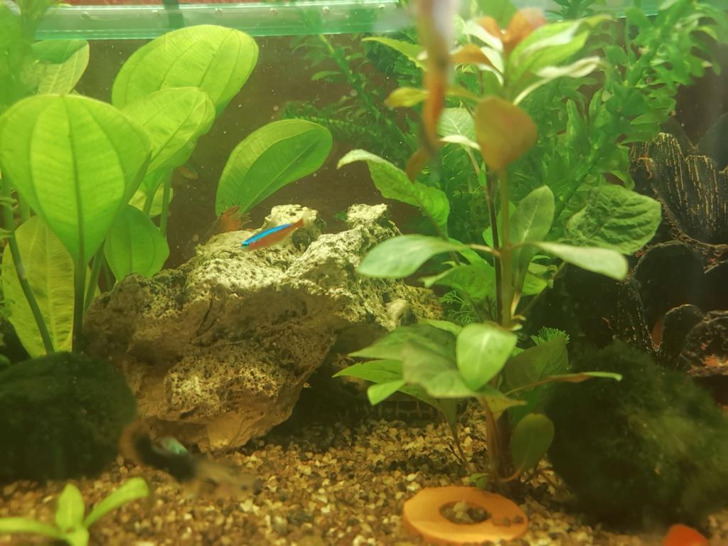 mon aquarium Img_2011