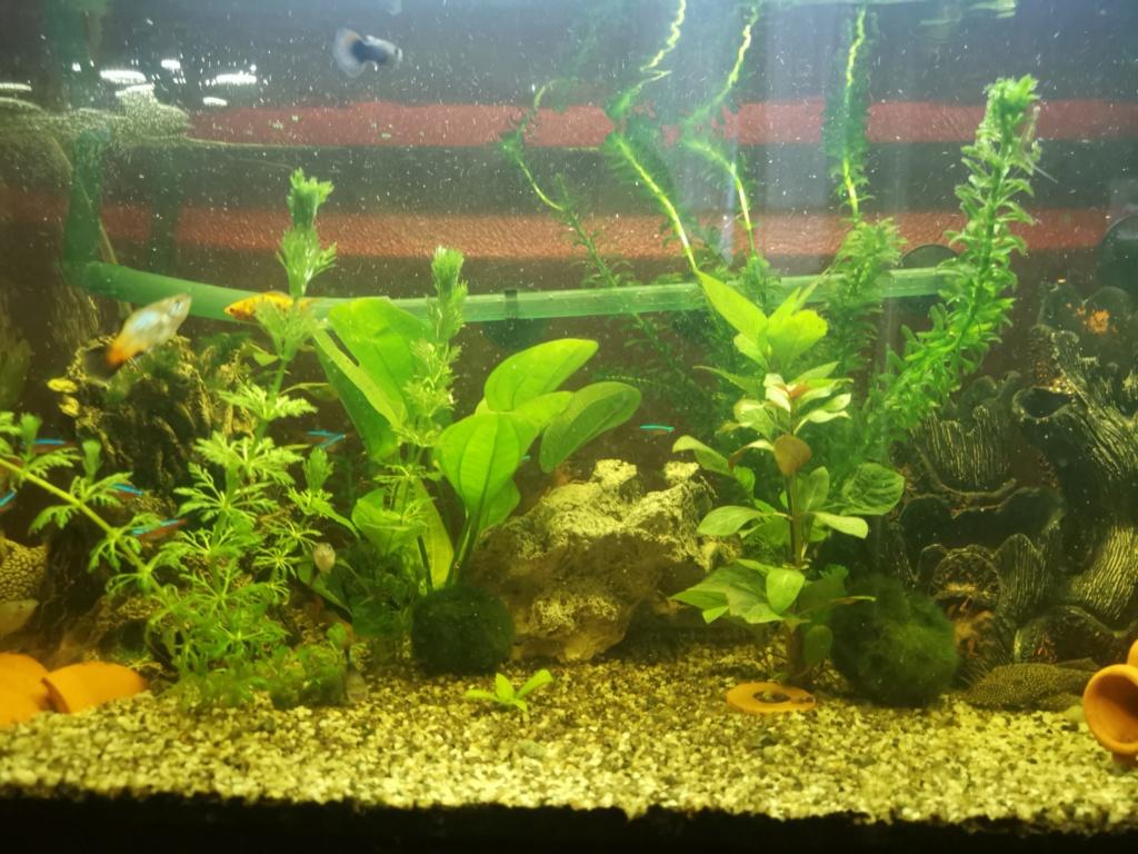 mon aquarium Img_2012