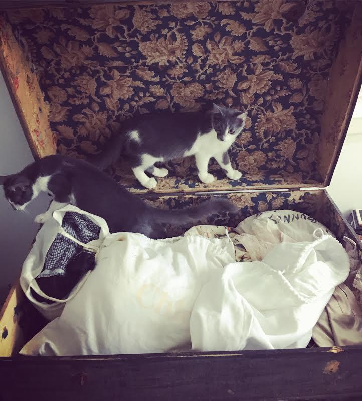 CHAMALLOW (Gaston) et CHATOUILLE (Kitty) 44b93810