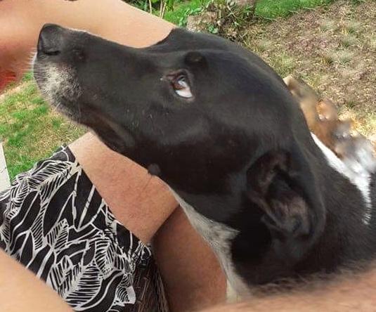 NIKITA, jeune chienne noire et blanche de 1,5 an pour 15,4 kg 63c43410