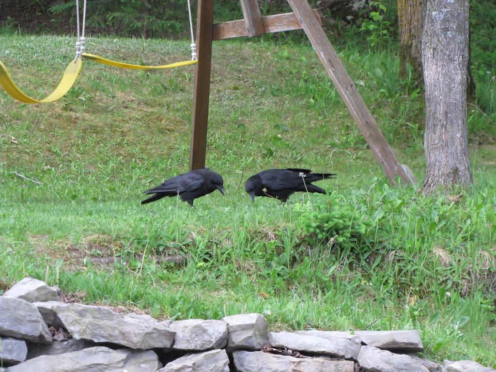 L'aigle et les deux corbeaux. - Page 2 Img_0711