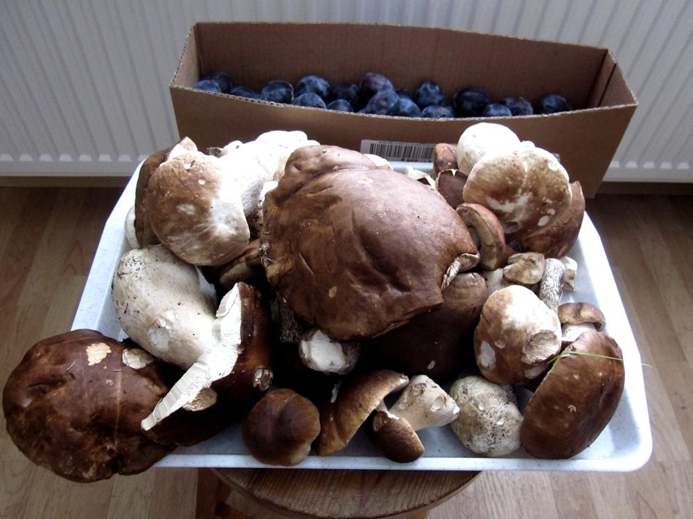 О грибах (что, где, когда?) - Страница 11 12_09_10