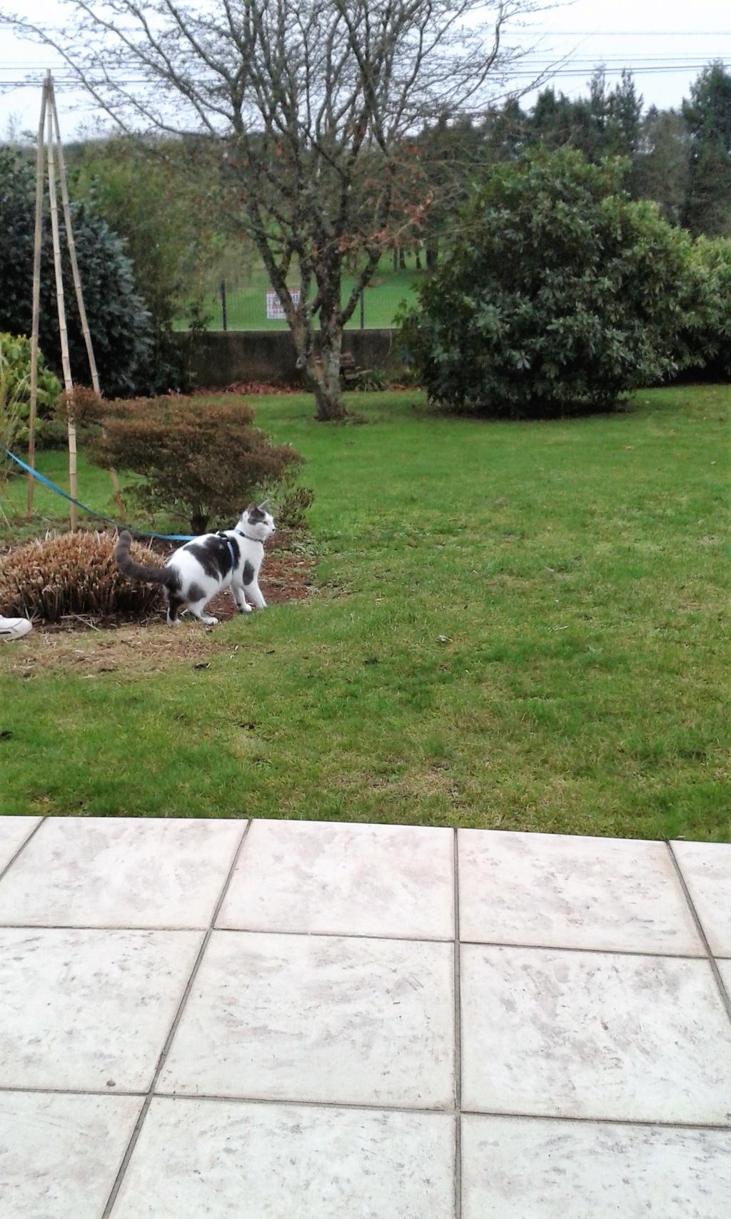 nolo - NOLO, chaton européen gris & blanc, né le 15/08/17 02610