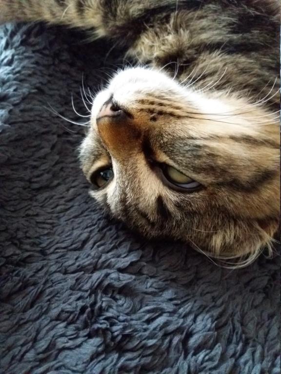 nika - NIKA, chatonne européenne tigré, poils mi-longs, née le 27/04/17 20171011