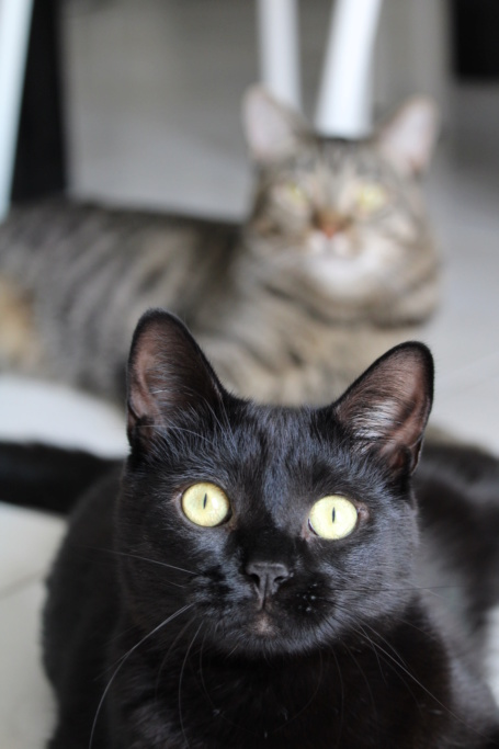 nepal - NEPAL, chaton noir, né le 06/05/2017 20180716