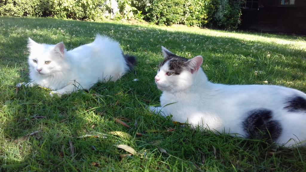 Napoléon, chaton européen blanc et tigré, né le 14/02/2017 - Page 2 20180718