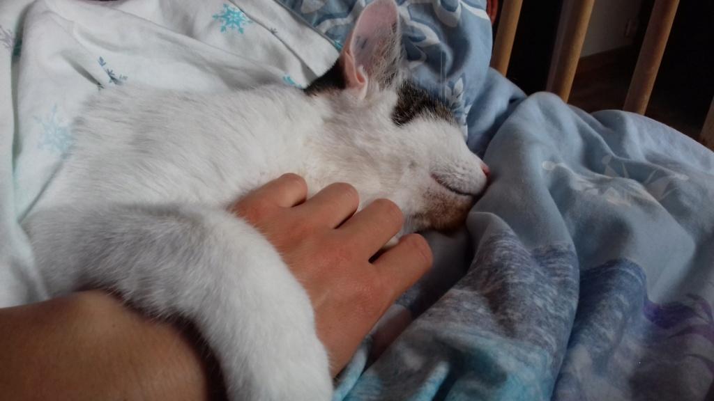 Napoléon, chaton européen blanc et tigré, né le 14/02/2017 - Page 2 20180910
