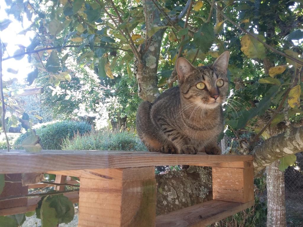 naoma - NAOMA, chatonne européenne tigrée, née le 27/04/17 20180915