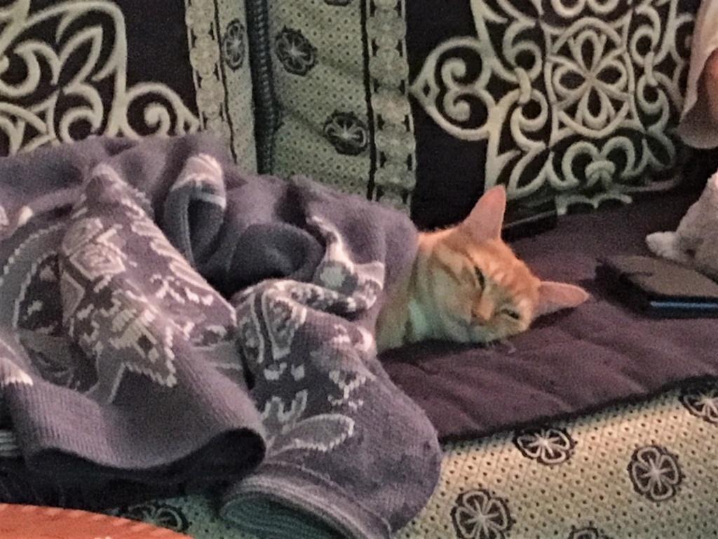 Nino , chaton roux Tabby et blanc, Né le 26/02/2017 Image110