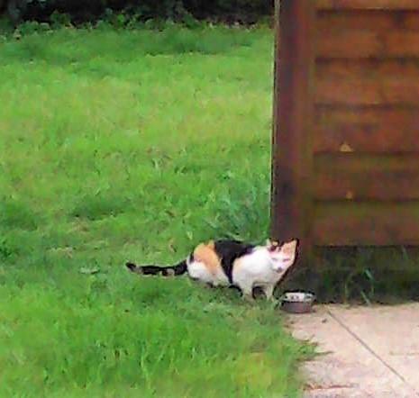 chat trouvé à Erdeven Img28810