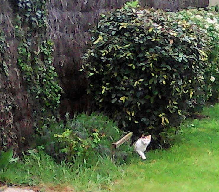 chat trouvé à Erdeven Img28811