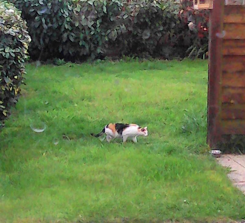 chat trouvé à Erdeven Img28812