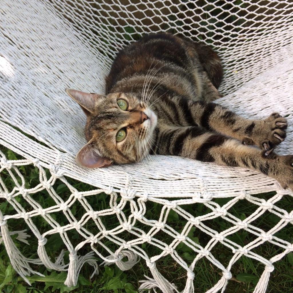 Nina chatonne néé le 2 avril 2017 Tigrée Grise  Img_3910