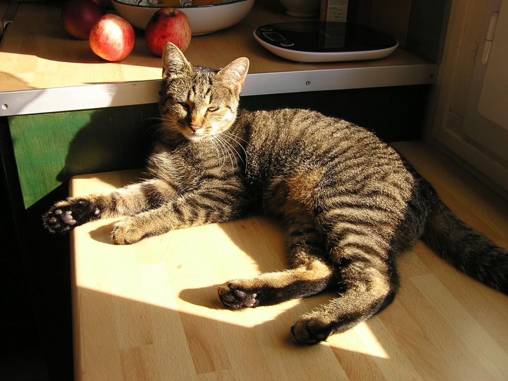 naoma - NAOMA, chatonne européenne tigrée, née le 27/04/17 P1010010