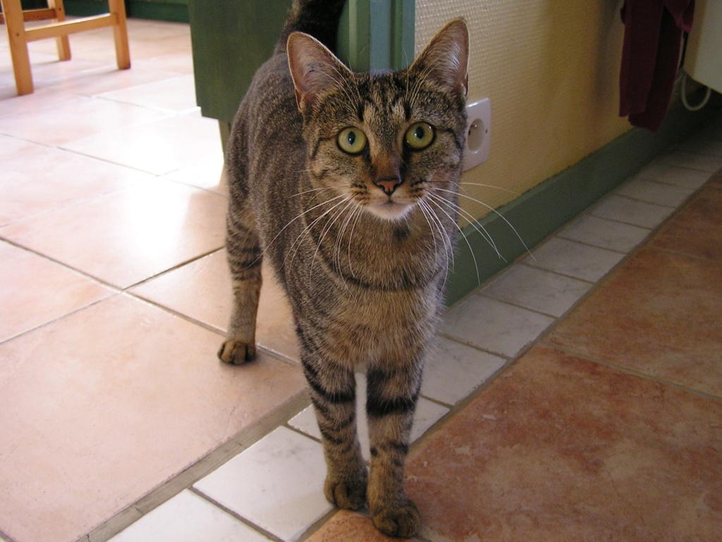 naoma - NAOMA, chatonne européenne tigrée, née le 27/04/17 P1010011