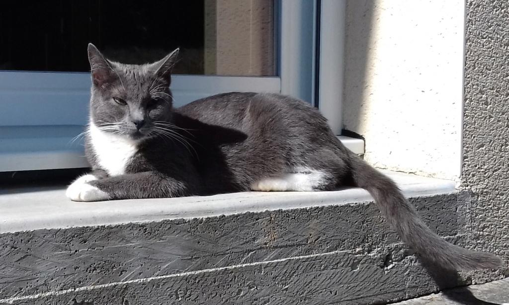 nesty - NESTY, chatonne grise et blanche, née début Mai 2017 Photo_15