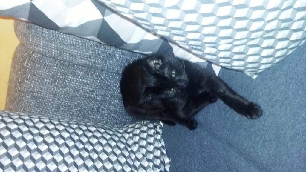 NABYSSA, chatonne noire, née le 08/09/17 Photos11
