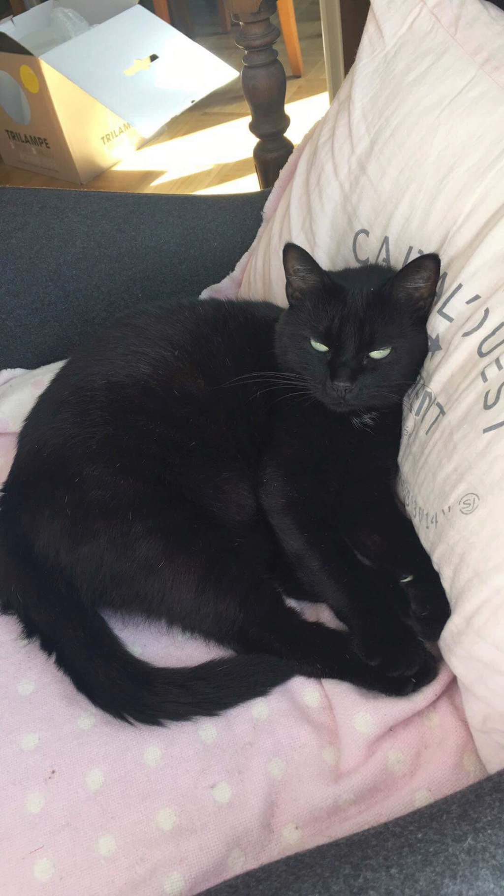 MAIKA, femelle noire, type européen, née en mai 2016 Unname17