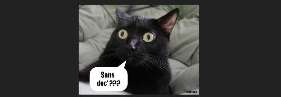 Du blog de Jeanne Smits...  - Page 3 Chat_q11