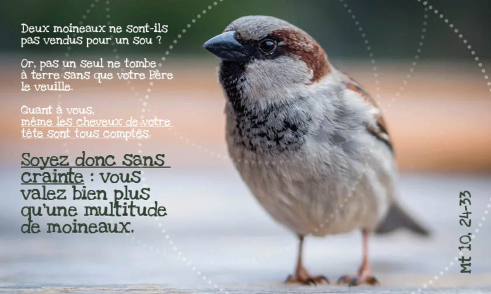L'Evangile du jour... Prions, méditons. - Page 9 Soyez_11