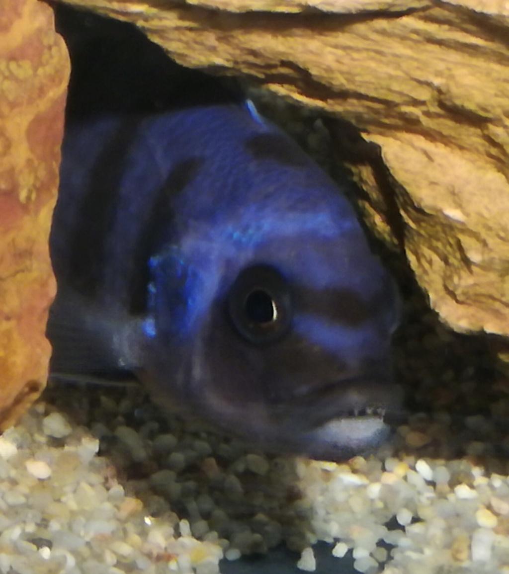 Aquarium 180l brut malawi Save_211