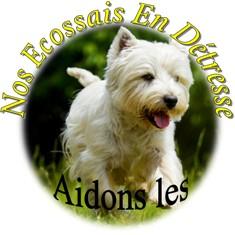 Nos Ecossais En Détresse Logo_n10